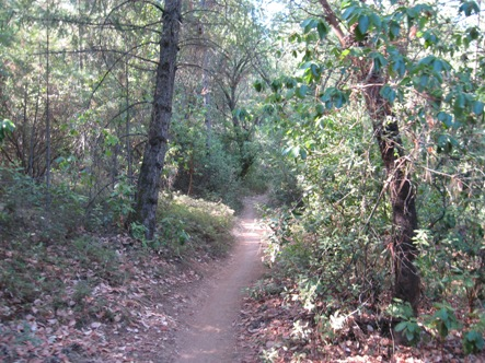 foresthill_trail_2